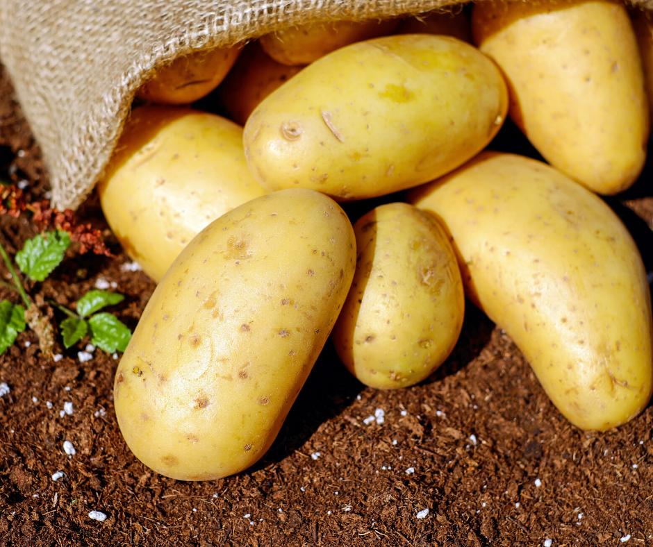 Ľuľok zemiakový