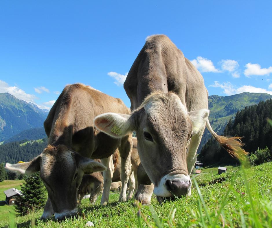 čo ovplyvňuje kvalitu mäsa