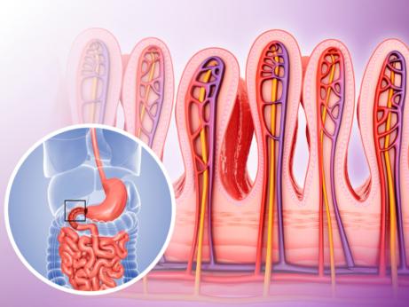 priepustné črevo